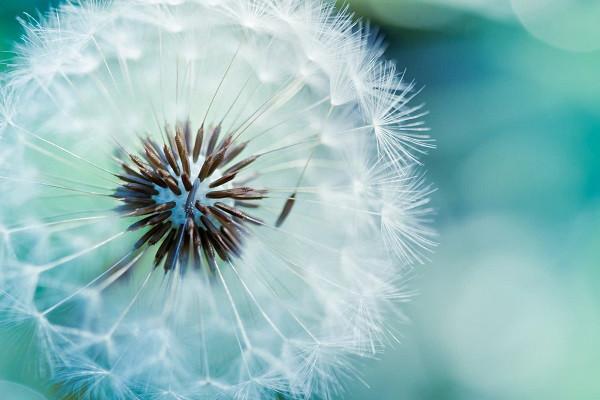 Hình nền hoa đẹp cho điện thoại - Ảnh 04