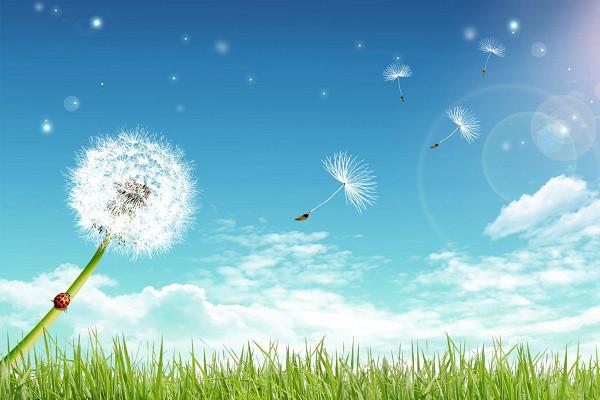 Hình nền hoa đẹp cho điện thoại - Ảnh 05