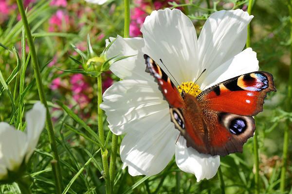 Hình nền hoa đẹp cho điện thoại - Ảnh 06