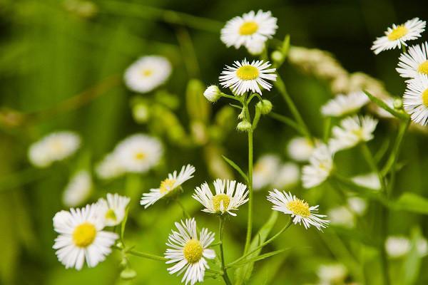 Hình nền hoa đẹp cho điện thoại - Ảnh 07