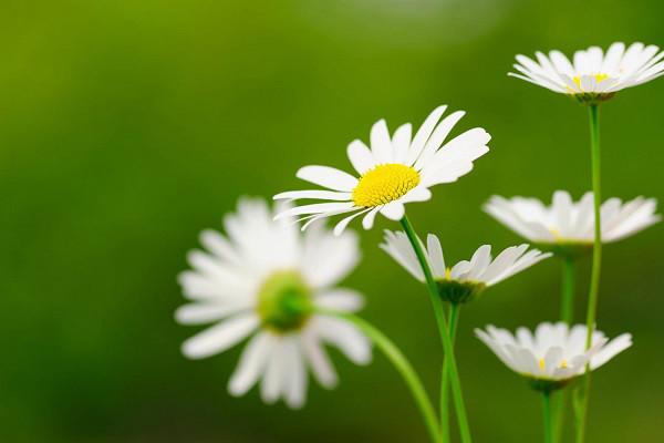 Hình nền hoa đẹp cho điện thoại - Ảnh 08