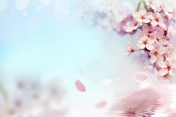 Hình nền hoa đẹp cho điện thoại - Ảnh 10