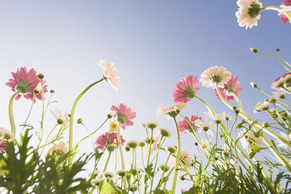 Hình nền hoa đẹp cho điện thoại - Ảnh 12
