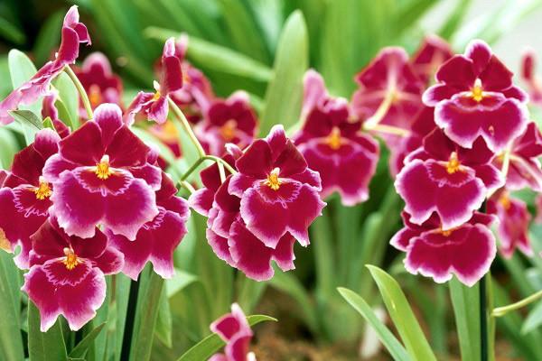 Hình nền hoa đẹp cho điện thoại - Ảnh 14