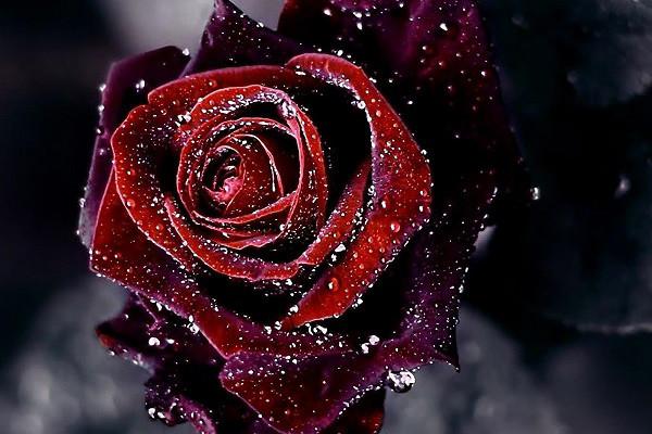 Hình nền hoa đẹp cho điện thoại - Ảnh 15