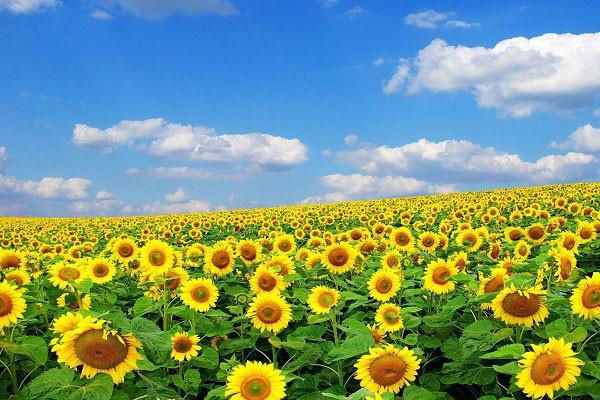Hình nền hoa đẹp cho điện thoại - Ảnh 16
