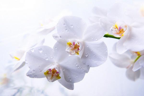 Hình nền hoa đẹp cho điện thoại - Ảnh 17