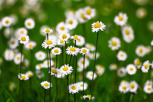 Hình nền hoa đẹp cho điện thoại - Ảnh 21