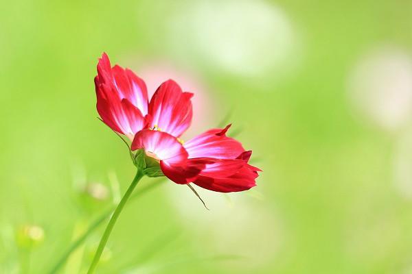 Hình nền hoa đẹp cho điện thoại - Ảnh 22