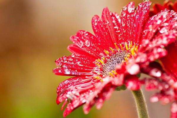 Tải ngay bộ hình nền hoa đẹp cho điện thoại mới nhất
