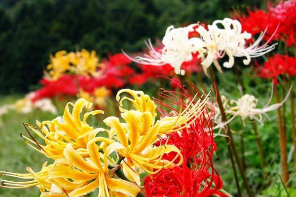 Hình nền hoa đẹp cho điện thoại - Ảnh 27