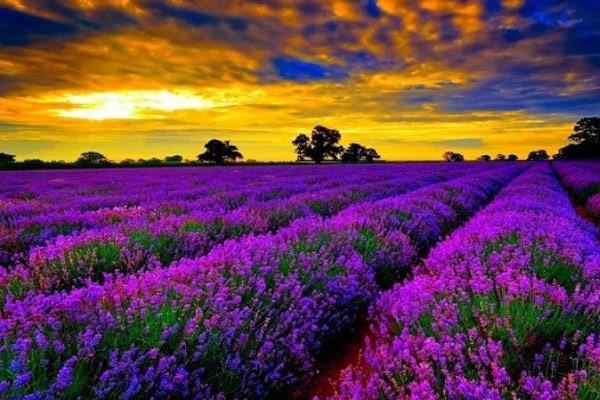 Hình nền hoa đẹp cho điện thoại - Ảnh 28