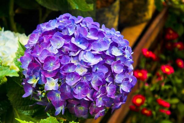 Hình nền hoa đẹp cho điện thoại - Ảnh 29