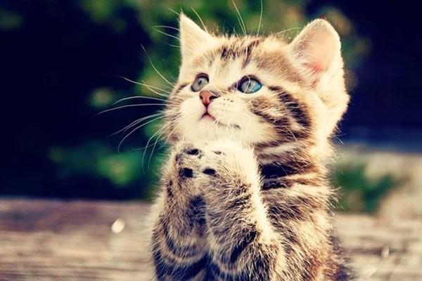 Tải ngay bộ hình nền mèo đẹp cho điện thoại