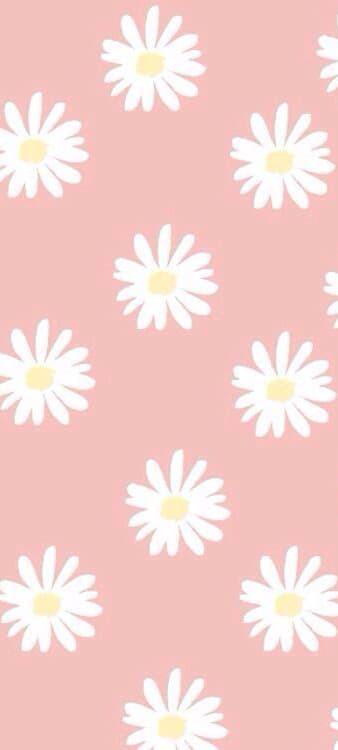 Hình nền hoa cúc trắng 1