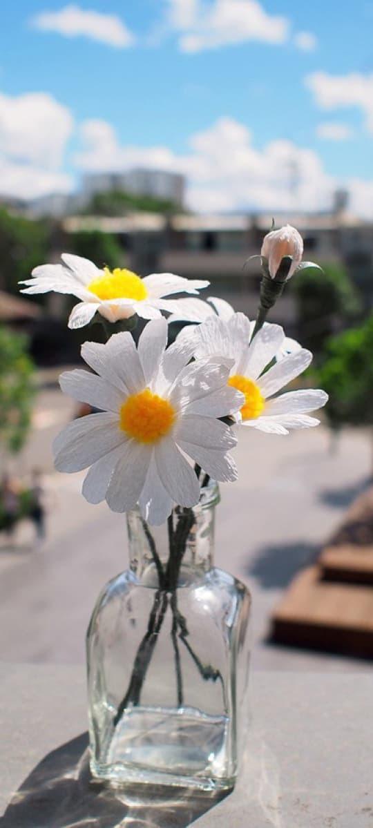 Hình nền hoa cúc trắng 15