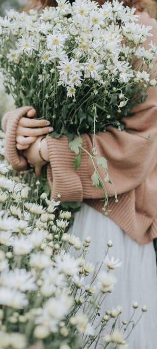 Hình nền hoa cúc trắng 17