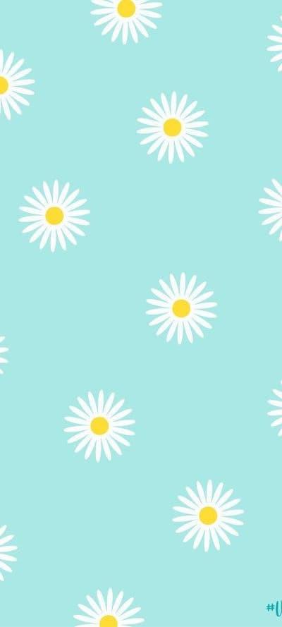 Hình nền hoa cúc trắng 6